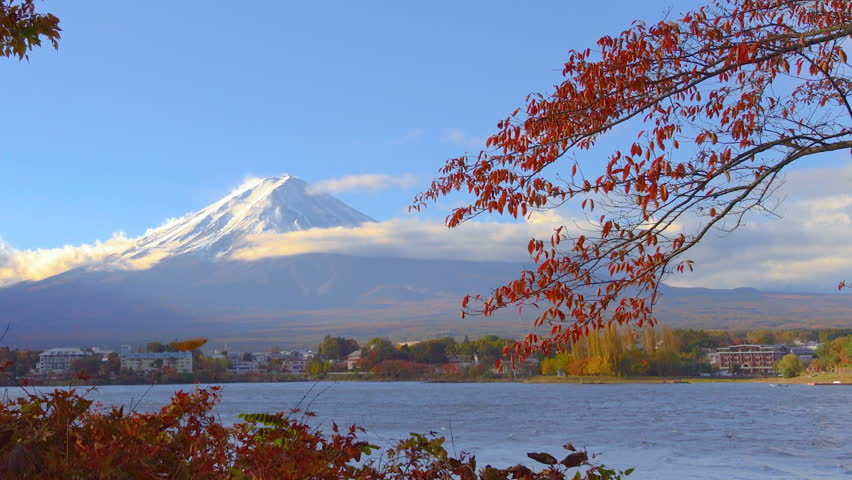 Colorful Autumn in Mount Fuji, Japan - Lake Kawaguchiko is one of the best places in Japan to enjoy Mount Fuji scenery of maple leaves changing color giving image of those leaves framing Mount Fuji. | Shutterstock HD Video #1011863555