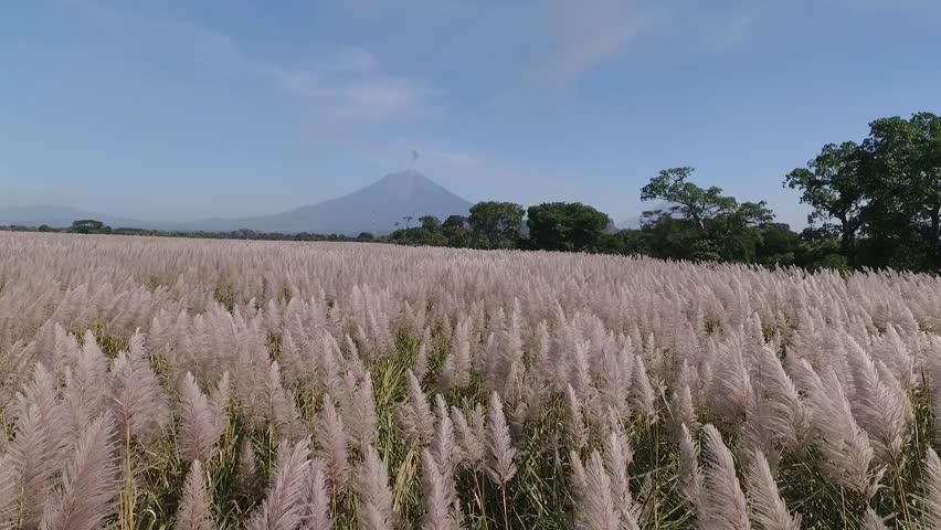 Costa pacifica de Guatemala, flor de caña, al fondo el volcán de fuego