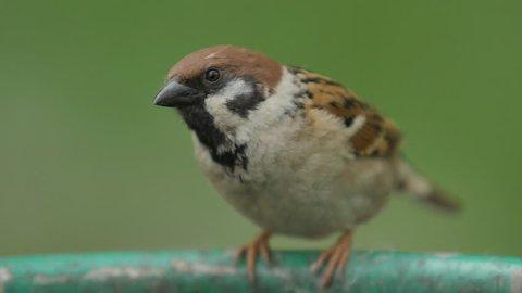 the Sparrow, Close Up