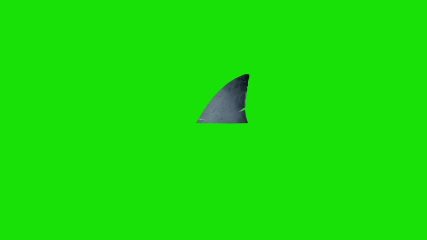 White Shark Fin Ocean Left Right Green Screen 3D Rendering Animations