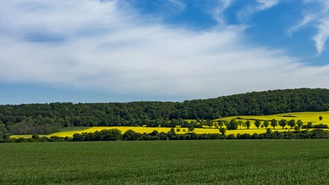 Rural landscape with fields of Rapeseed / Oilseed in full bloom. Rape seed oil from these fields is used to produce alternative fuels. Background clip for alternative energy concepts.