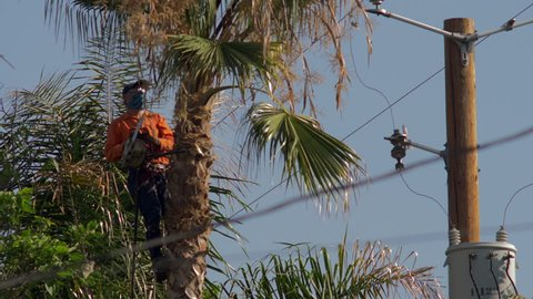 MAN TRIMMING PALM TREE NEAR HIGH VOLTAGE POWER LINES.  4K SLOW MOTION