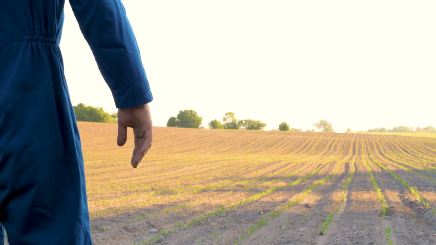 A young farmer walks the field looking at planted plants. Concept: clean air, bio, agriculture. | Shutterstock HD Video #1012804805