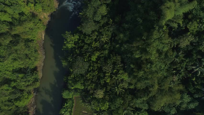 Aerial View of River Across a Beatiful Dense Forest in the Sunrise, Ciamis, West Java Indonesia, Asia | Shutterstock HD Video #1012828115
