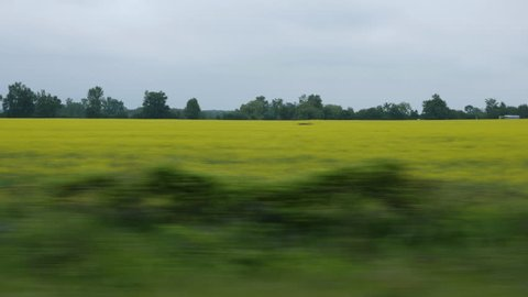 Driving past canola rapeseed fields with grey clouds. Ontario, Canada.