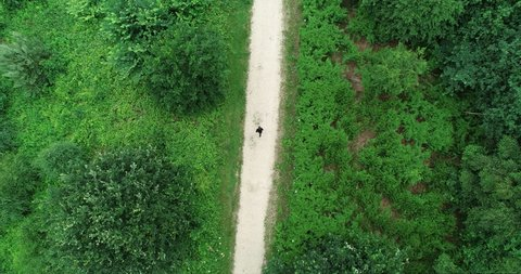 Aerial of Fitness Runner running into distance and thick nature woodland forest.  Tracking shot of man jogging and training on path road alone for marathon.