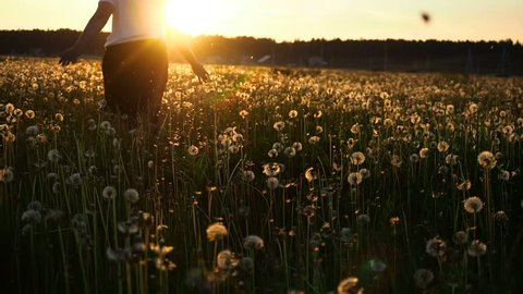 Portrait Of A Senior Woman Living In The Countryside. Adult Woman Enjoying View Dandelion Field At Sunset. Harmony Happiness Tranquillity Concept.