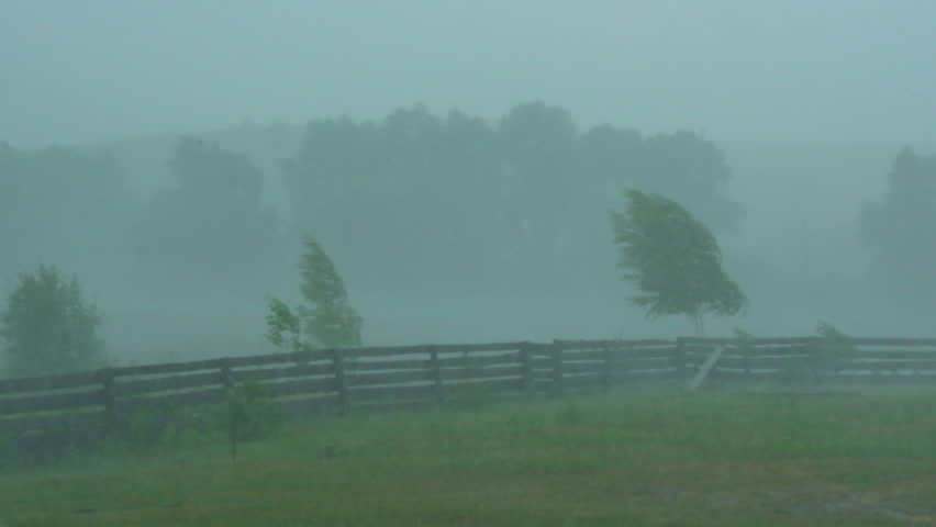 Heavy rain showers in the countryside. strong wind bends trees. | Shutterstock HD Video #1013460935