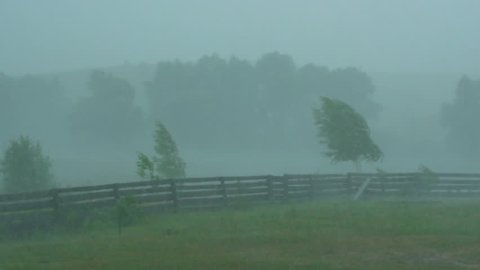 heavy rain showers in the countryside. strong wind bends trees.