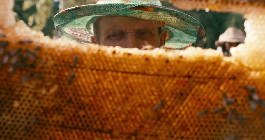 Close-up portrait of the old beekeeper in hat veil holding and inspecting the honeycombs on the wooden frame with bees. RED camera shot.