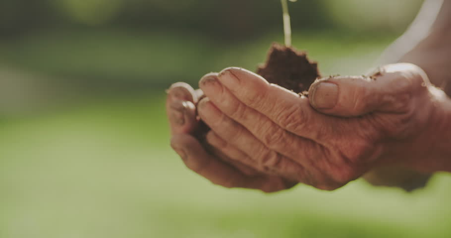 old man planting sprout in forest. farmer caring about reforesting. ecology, farming concept 4k