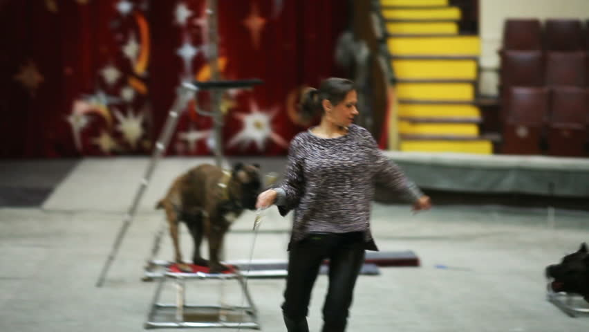Rehearsal of dogs show performance in the circus