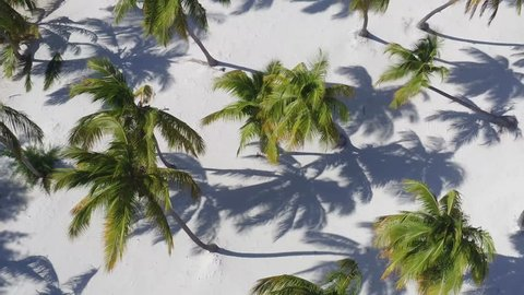 The Hawaiian Islands, the best beaches in the world. Palm trees and white sand / Top view. Palm trees on the ocean. Summer and beach. Palms