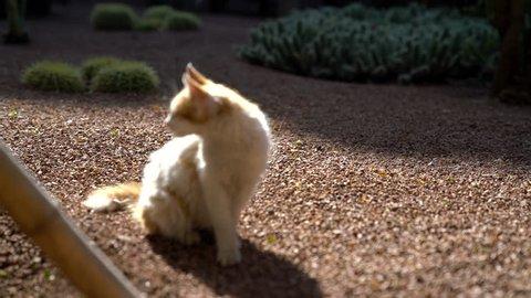 A feral kitten wandering around the Majorelle Garden in Marrakech, Morocco.