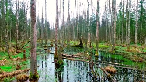 Poland, Bialowieza, swamp and forest area, drone shot
