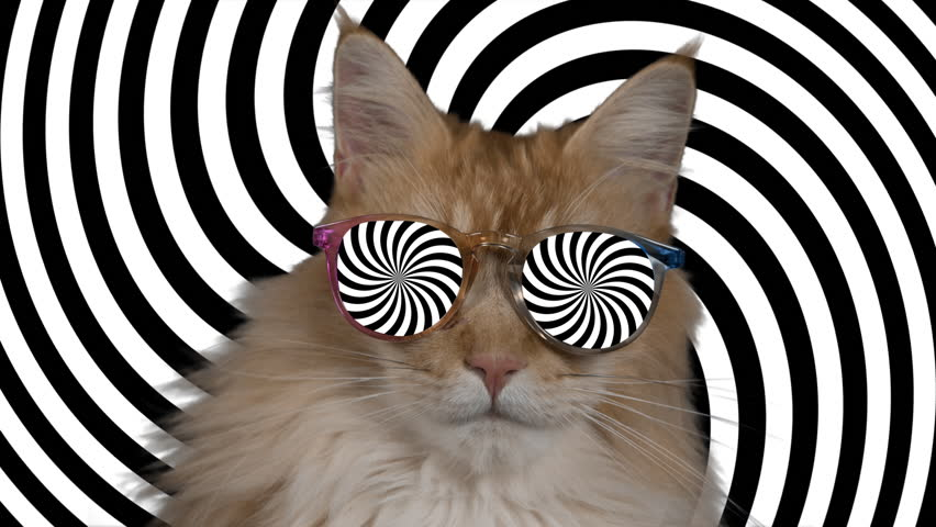beautiful cool disco cat with hypnotic sunglasses