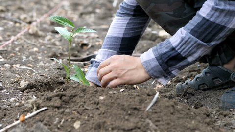 Hand of male plant a tree. Conservation natural environment