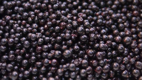 Fresh, ripe currant rotate, wild berry. Fresh blackcurrants in bowl.