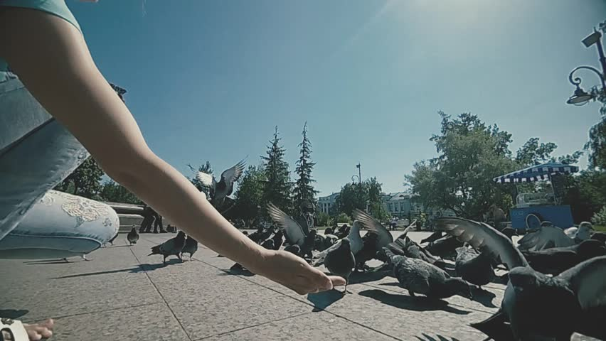 A boy of three years with his mother playing and feeding pigeons in the city Park. slow motion | Shutterstock HD Video #1014019325