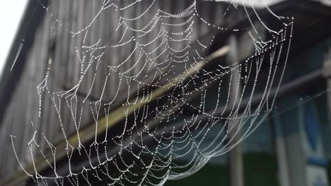Cobweb with water droplets in rural areas