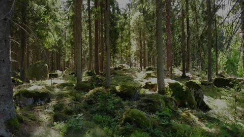 Drone footage of an old forest in Smaland,  Sweden