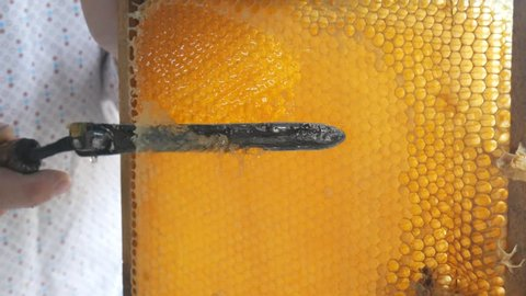 Hand using a knife to clog honeycombs with honey in a frame. Beekeeper Unseal Honeycomb.