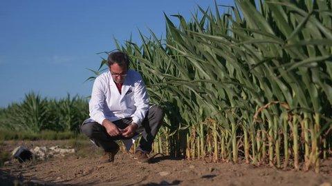 Scientist in lab coat in a field taking soil samples in a test tube.