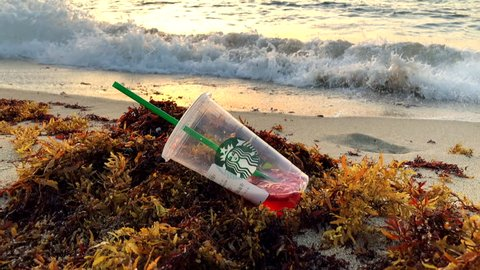 MIAMI - JULY 9, 2018: A discarded Starbucks cup with long plastic straw lies in the seaweed on the shore of South Beach at sunrise.