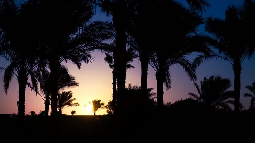 Palm trees in the sunrise. Sunrise in Egypt.   Shutterstock HD Video #1014756785