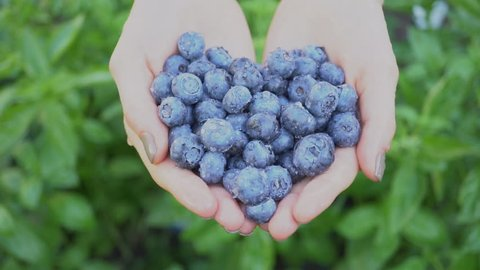 Blueberries in hand on green background,Handful of fresh and health berries