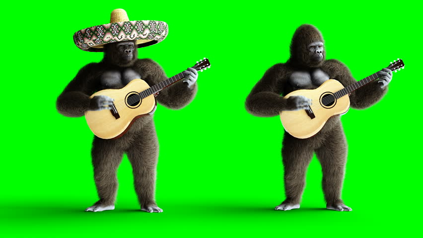Funny brown gorilla play the guitar. Super realistic fur and hair. Green screen 4K animation.