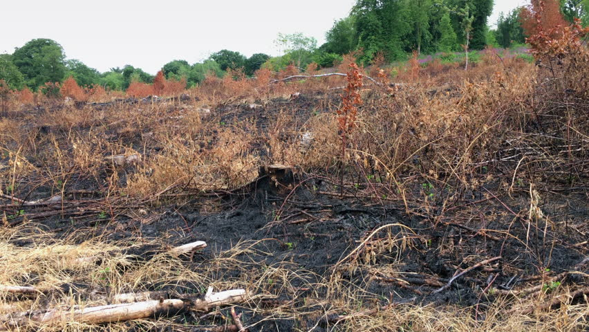 Gorse fire damage to sloping field in the countryside.