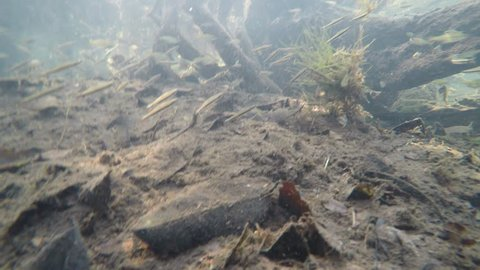 tetra fish and dwarf cichlids