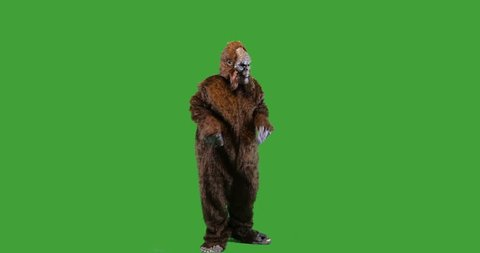 Bigfoot or Sasquatch creature dancing  on green screen.