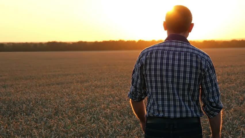 The camera follows a man walking a farmer on a wheat field at sunset.
