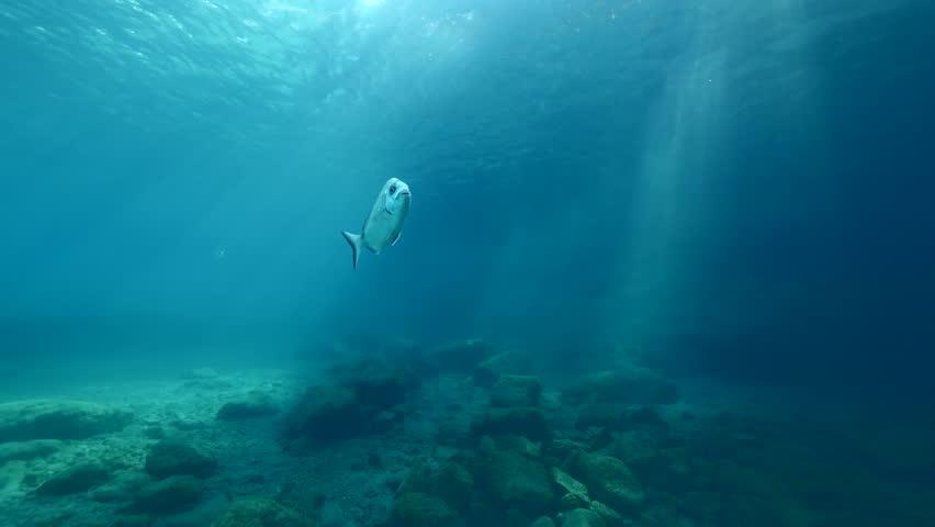 sun shine beams and rays on sea floor underwater slow motion fish around