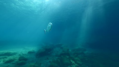 sun shine beams and rays on sea floor underwater slow motion fish around