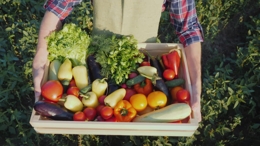 Top view: The farmer is holding a wooden box with a set of various vegetables. Organic farming and farm products | Shutterstock HD Video #1015258285