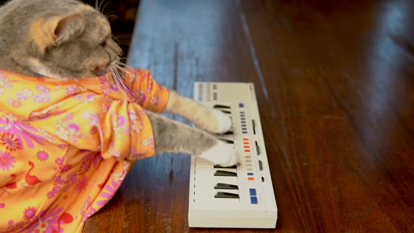 This slow motion side view video shows a cute cat in a colorful shirt playing a keyboard piano.
