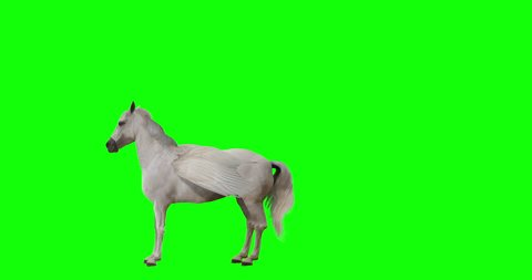 Pegasus and winged Unicorn flying on a transparent background. Isolated and cyclic animation. Seamless loop. Green Screen