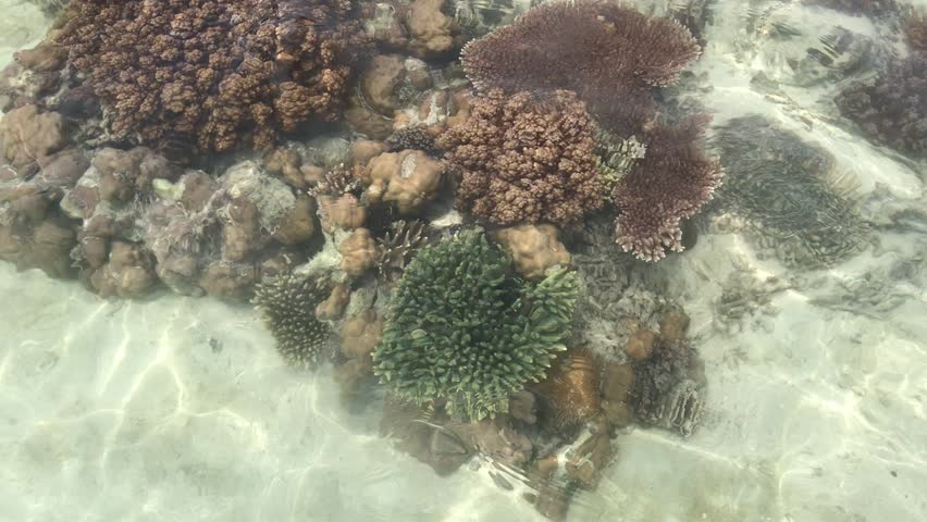 Beautiful corals at Semporna island, Sabah Malaysia. The video shoot from the surface of the water.