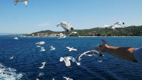 feeding gulls from a ship against the sea