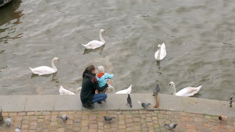 mother and her little child are feeding white wild swans, standing on city embankment