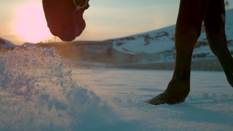 SLOW MOTION, CLOSE UP, DOF: Detail of dark horse walking trough deep snow blanket at winter sunset. Horse legs walking in fresh snow on winter morning. Black horse legs and hoofs on snowy field