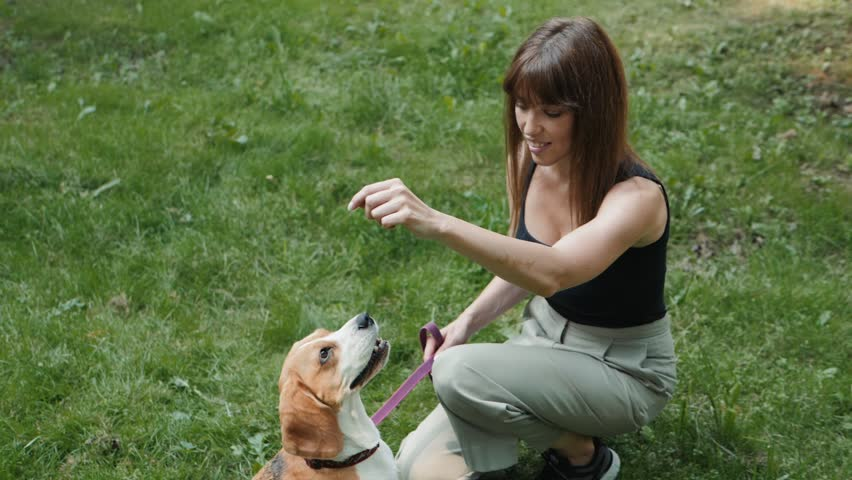 Dog walker with dogs enjoying in park. professional servise training in forest and city streets, beagle