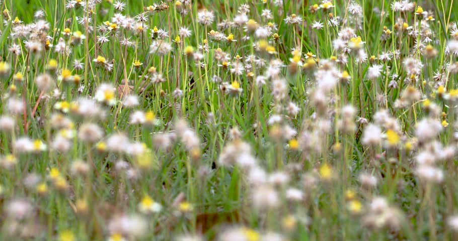 Close up of the white stock footage video 100 royalty free beautiful white grass flowers mightylinksfo