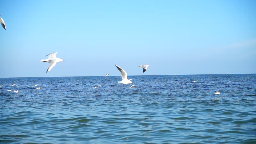Seagulls fly over the sea. Slow motion. | Shutterstock HD Video #1016310175