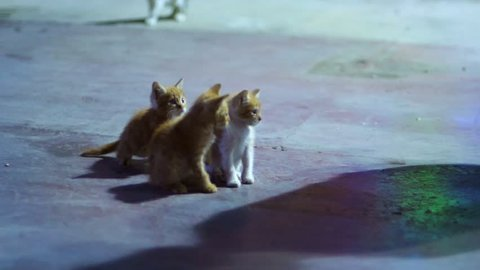 Three red kitten playing outdoor. Beautiful homeless kittens living on street. Little kittens on road. Caring for homeless animals. Amusing domestic cats running outside