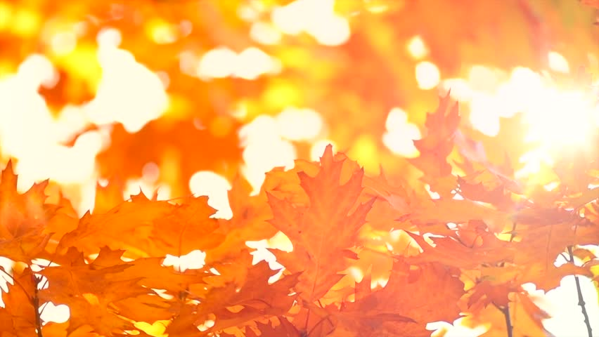 Autumn Leaves Nature Background Leaf Stock Footage Video 100 Royalty Free 1016363815 Shutterstock