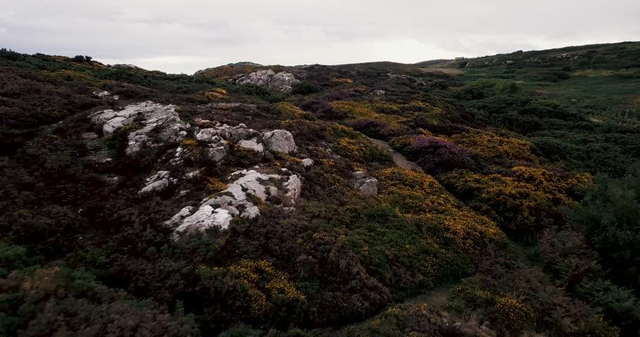 Cinematic flying over flowers in Ireland   Shutterstock HD Video #1016557315